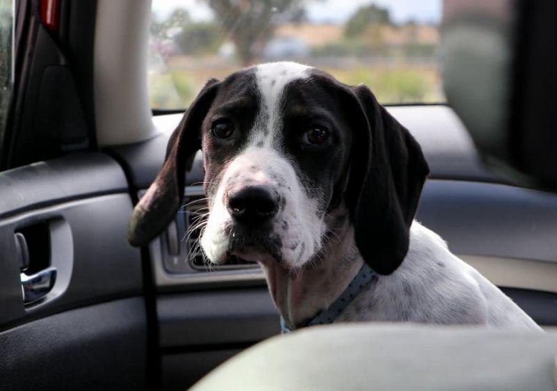 Mascotas: ¿con quién se quedan en caso de divorcio o separación?